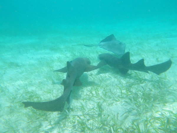 20110618_10_Caye_Caulker_Snorkeling.jpg