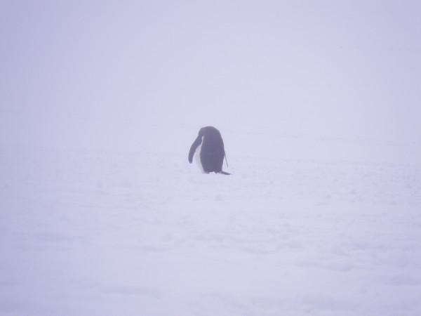 995_Antarctica_Highlight.jpg