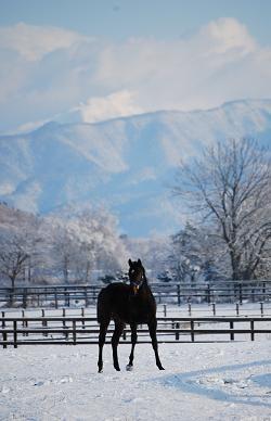 11・雪原・タキオン牝馬