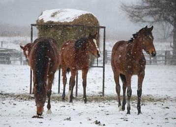 12・冬の嵐・雪の中