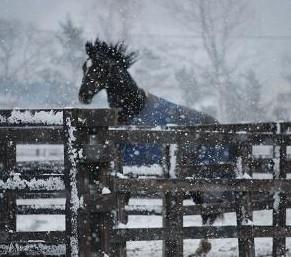 12・冬の嵐・休養馬