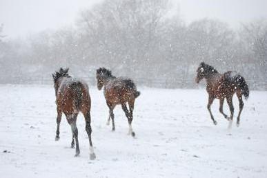 12・冬の嵐・駆ける