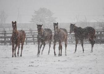 12・冬の嵐・4頭