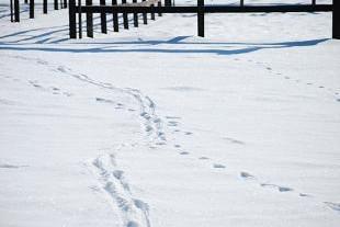 1・パドック・野生の足跡
