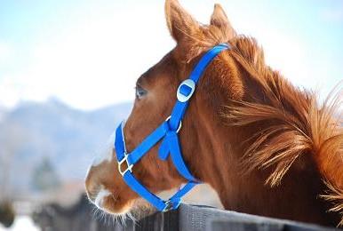 1・パドック・ジャンポケ牡馬