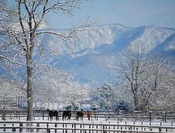 1・大雪・育成牝馬