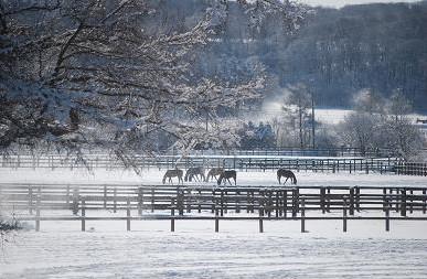 1・大雪・1歳牡馬