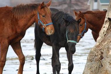 1・大雪・前のクロフネ&牡馬2