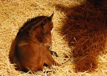2・デュラン誕生・3時間後・眠り