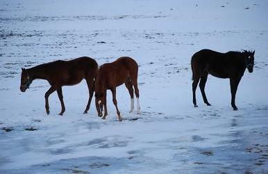 2・夕方・牝馬氷に