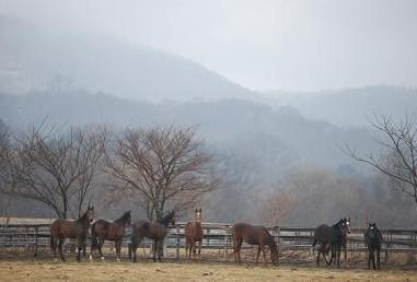 3・合流・牝馬8頭
