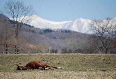4・春の山・デュラン熟睡