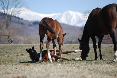 4・春の山・ディープ起こす2