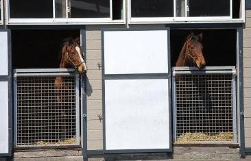 4・再確認審査・見守る馬たち