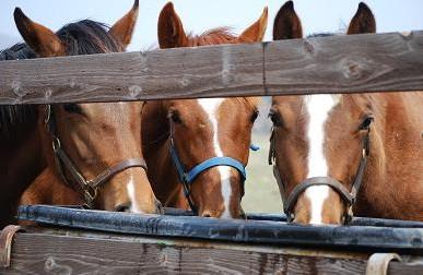 4・水・牝馬3頭