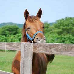 6・1歳牡馬・クロフネ