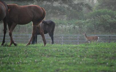 8・夕刻・牝馬と鹿