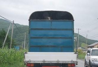 8・セール・前方の馬運車
