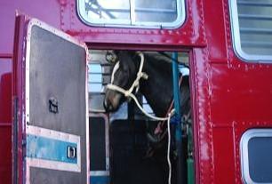10・海・車内の馬