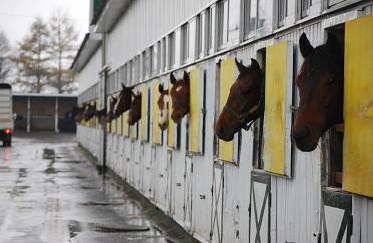 11・見送り・厩舎の馬たち