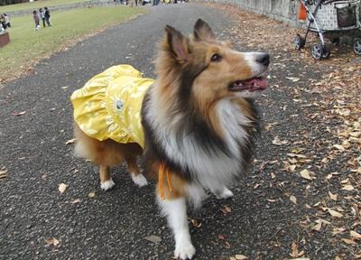 秋のオフ会 マリンちゃん ドレス
