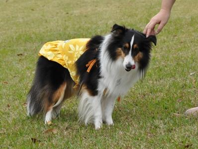 秋のオフ会 よつばちゃんドレス