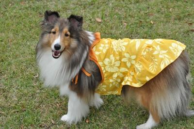 秋のオフ会 風呼ちゃん ドレス