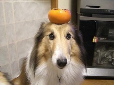 柿 fooこれ食べれるのかな?