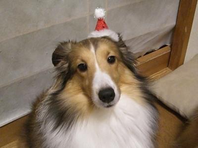 帽子かわいい?