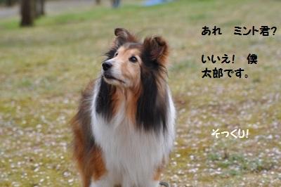 22.4.10 ミント隊長にそっくりな  太郎くんだって!