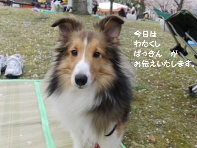 22.4.10 私が ぱつ! 今日の主役