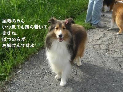2010.7.4風呼ちゃん わたしより若いんだよ! 大人雰囲気わけてちょ
