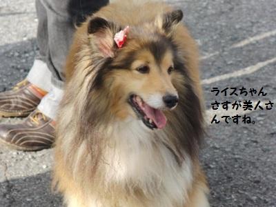 2010.7.4ライスちゃんさすが美人さんね