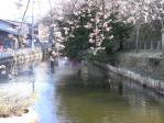 2010堀桜