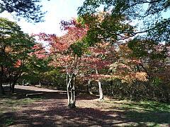 山ノ上公園の紅葉