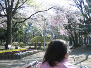 2011 04 14 通園風景