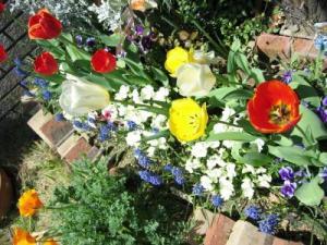 2011 04 17 G春の花壇