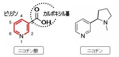 ニコチン酸とニコチン