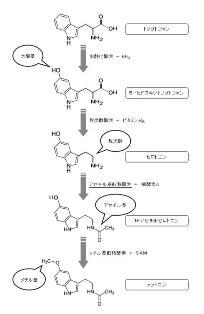 メラトニン合成