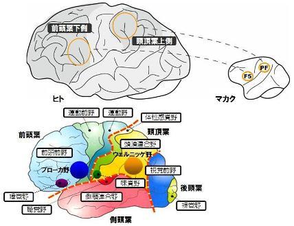 共感脳-1