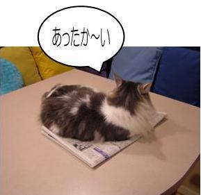 猫32-1