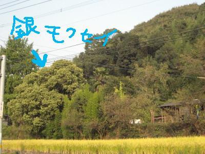 IMG_6367_2-1.jpg