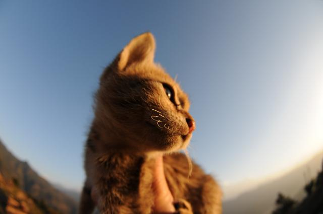 朝日を睨むバブー
