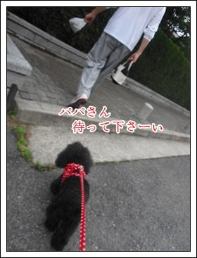 CIMG8533.jpg