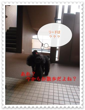 CIMG9230.jpg