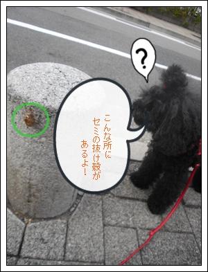 CIMG9379.jpg