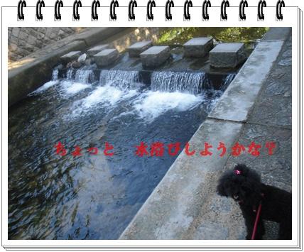 CIMG9533.jpg