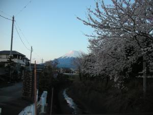 桜と富士山 4/6