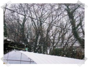 雪、降りました