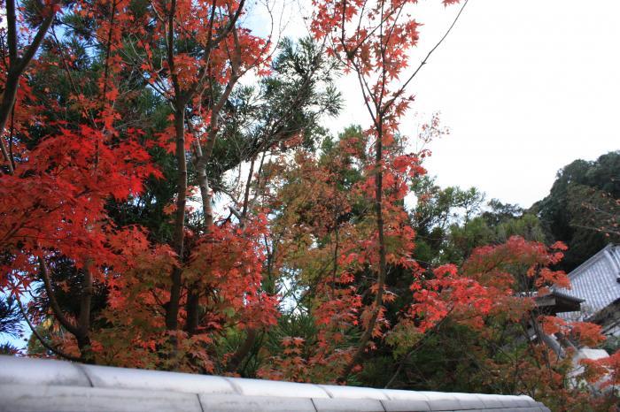 太宰府天満宮の紅葉写真